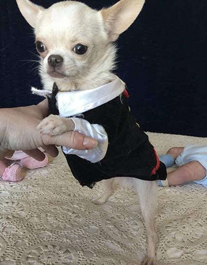 Home | Debs Chihuahuas